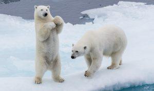 북극곰의 눈물